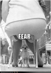 fear-chihuahua-uhoh